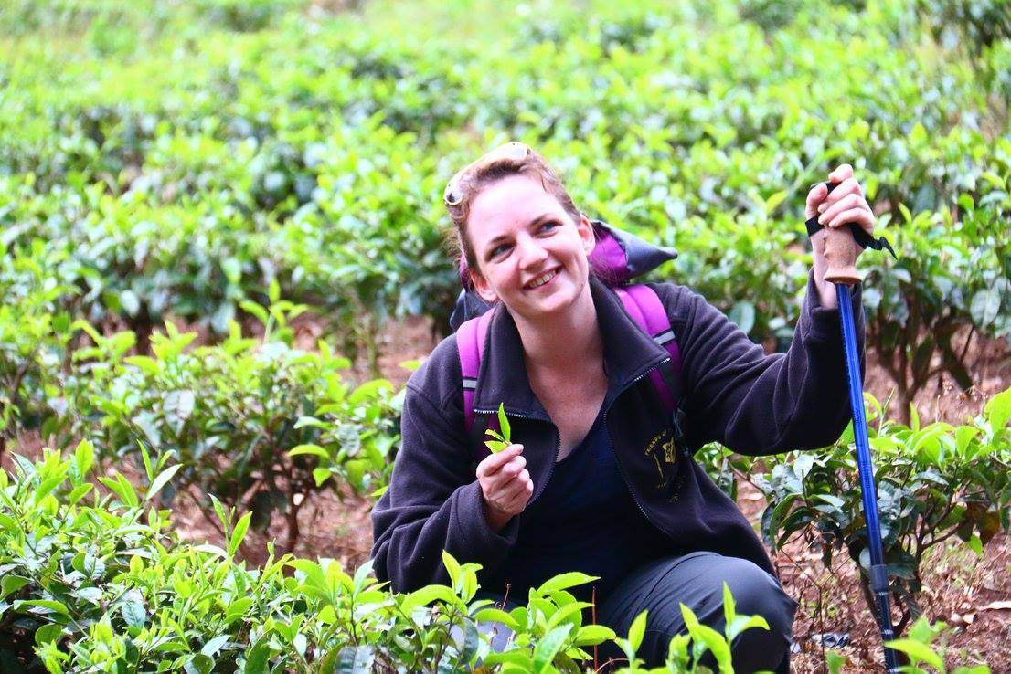 blog images/Harambee Nov 16/Susie Quinn picking tea on the trekking route